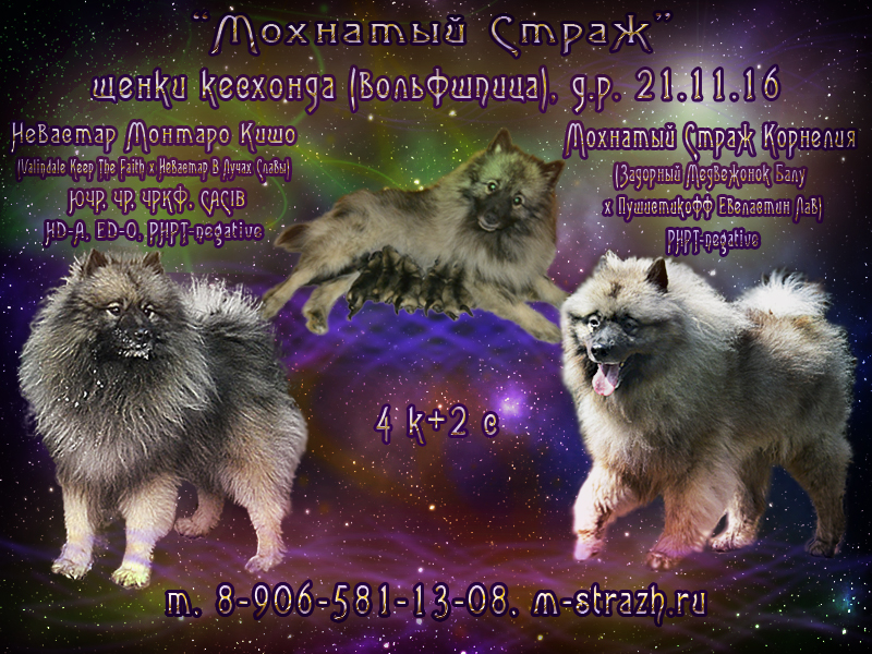 http://m-strazh.ru/assets/images/nelia/reklama_neli_monia.jpg