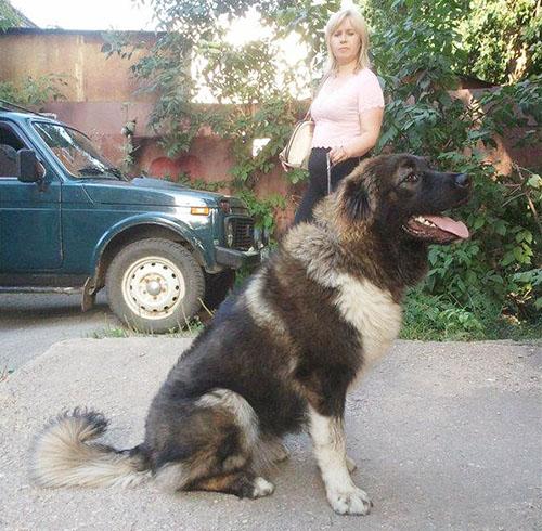 http://m-strazh.ru/assets/images/orlita/orlita_alan/Miliana8mes2.jpg
