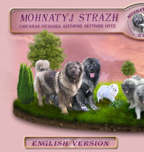 MOHNATYJ STRAZH - Caucasian Ovcharka and Keeshond - Russia - Voronezh