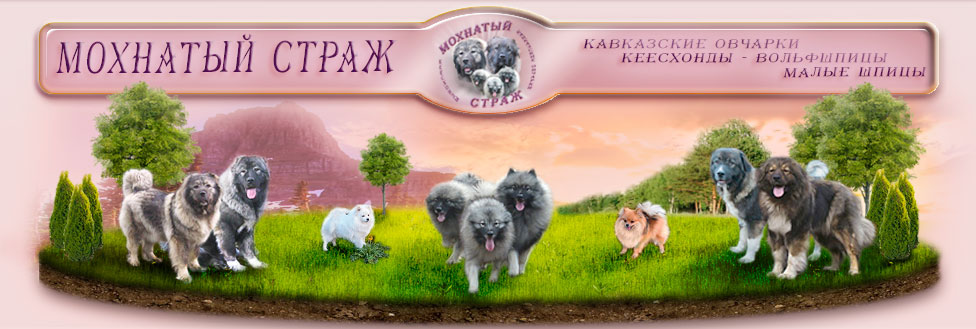 http://m-strazh.ru/img/images/zagolov2015.jpg